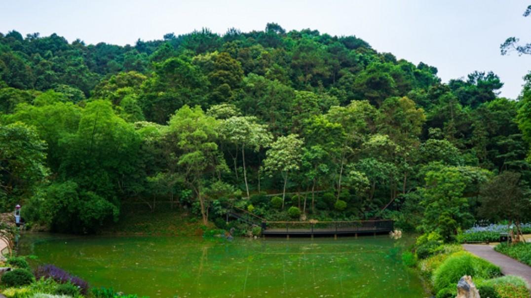 星月湖-高峰森林公园